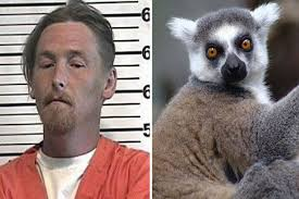crazy-theft-case-los-angeles-lemur.jpg